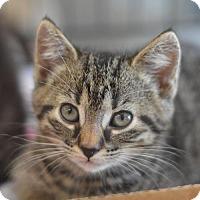 Adopt A Pet :: Pearl - Madison, NJ