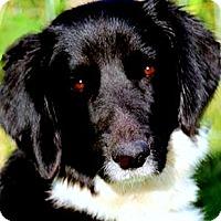 Adopt A Pet :: MINNIE & LANCE(PLS READ !!) - Wakefield, RI