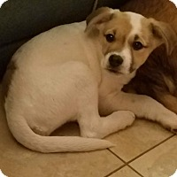 Adopt A Pet :: Sara - Mount Holly, NJ