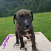 Adopt A Pet :: Jordan - Niagra Falls, NY
