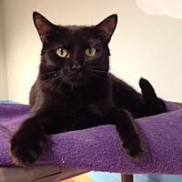Adopt A Pet :: Reginald - Byron Center, MI