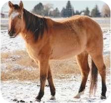 Quarterhorse for adoption in Blackfoot, Idaho - Give Me A Home!