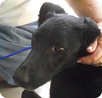 German Shepherd Dog Mix Dog for adoption in Birmingham, Alabama - Wilma