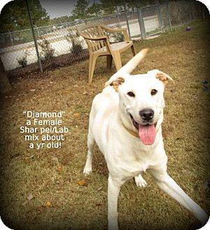Labrador Retriever/Shar Pei Mix Dog for adoption in Gadsden, Alabama - Diamond