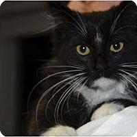 Adopt A Pet :: Cookie Dough - Lunenburg, MA
