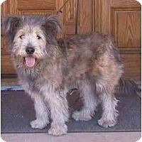 Adopt A Pet :: WIZARD - dewey, AZ