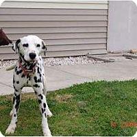 Adopt A Pet :: Chaz - League City, TX