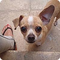 Adopt A Pet :: Gordo - Los Angeles, CA
