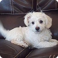 Adopt A Pet :: Max - Stockton, CA