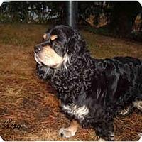 Adopt A Pet :: KADIE - Tacoma, WA