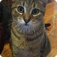 Adopt A Pet :: Sesame - Alexandria, VA