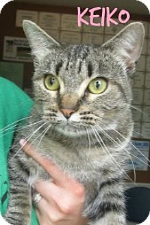 Domestic Shorthair Cat for adoption in Chisholm, Minnesota - Keiko