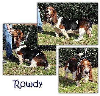 Basset Hound Mix Dog for adoption in Marietta, Georgia - Rowdy