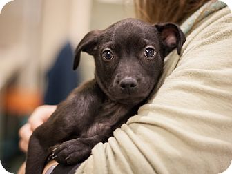 Terrier (Unknown Type, Medium) Mix Puppy for adoption in Dallas, Texas - Davy