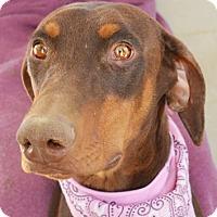 Adopt A Pet :: Missy - Littlerock, CA
