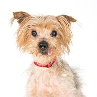 Adopt A Pet :: Herman - St. Louis Park, MN