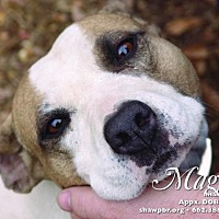 Adopt A Pet :: Maggie - Columbus, MS