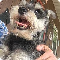 Adopt A Pet :: Otto - Washington, DC