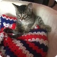 Adopt A Pet :: Stella - McHenry, IL