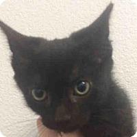 Adopt A Pet :: DALLAS - Bonita, CA