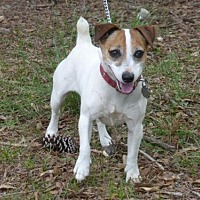 Adopt A Pet :: Fitz - Conway, SC