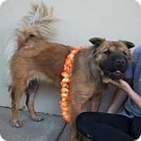 Adopt A Pet :: Leia - McKinney, TX
