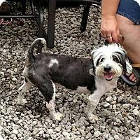 Adopt A Pet :: MATT - WOODSFIELD, OH