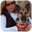 Photo 3 - German Shepherd Dog Puppy for adoption in Los Angeles, California - Freddy von Sayers - PETITE