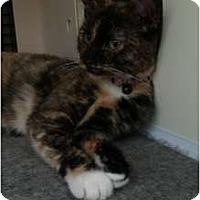 Adopt A Pet :: Skye (PO) - Little Falls, NJ