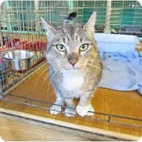 Adopt A Pet :: Maria - Pascoag, RI