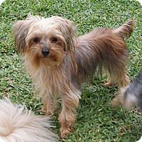 Adopt A Pet :: Lucas - CAPE CORAL, FL