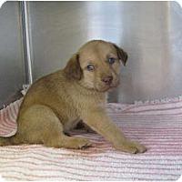 Adopt A Pet :: Babe - Alexandria, VA