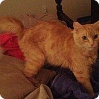 Adopt A Pet :: Allie - Greenville, SC
