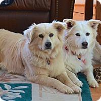 Adopt A Pet :: Susie and Sassy - Yorktown, VA