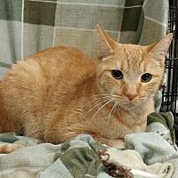 Adopt A Pet :: Oliver - Baton Rouge, LA