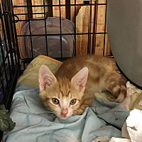 Adopt A Pet :: Max - Long Beach, CA