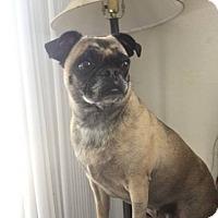 Adopt A Pet :: Moana - Huntington Beach, CA