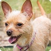 Adopt A Pet :: Tia - Dallas, TX