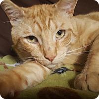 Adopt A Pet :: Finnegan - Staten Island, NY