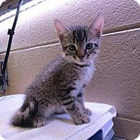 Adopt A Pet :: Superman - Douglasville, GA