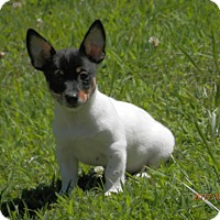Adopt A Pet :: Dover - Clarksville, TN