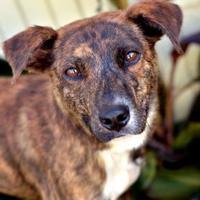 Adopt A Pet :: Molecule - Fort Smith, AR
