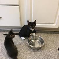 Adopt A Pet :: Hope - Randleman, NC