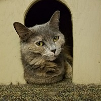 Adopt A Pet :: Isabelle - Elyria, OH