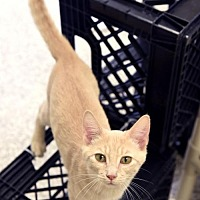 Adopt A Pet :: Rainbow Dash - Chattanooga, TN
