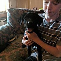 Adopt A Pet :: Millie - Covington, TN