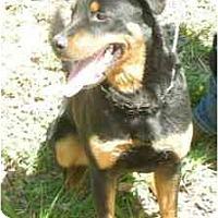 Adopt A Pet :: Monty-Purebred ! - Chandler, IN