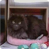 Adopt A Pet :: Boo - Greenville, SC