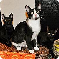 Adopt A Pet :: Mona Lisa *REDUCED FEE* - San Diego, CA