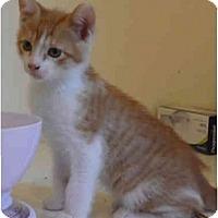 Adopt A Pet :: Valor - Davis, CA